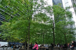 Tall trees at Zuccotti Park Street acrobat jumping over people bent over at Zuccotti Park Manhattan New York.jpg