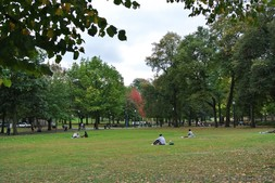 People sitting on grass at Boston Common Park.jpg