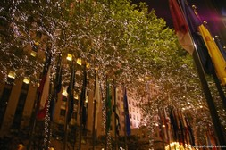 Lit trees at the Rockefeller Plaza in New York.jpg